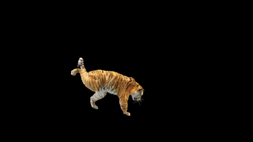 Tiger Dancing, 3d rendering, animal realistic, cartoon, Animation Loop,  Included in the end of the clip With Alpha Matte.