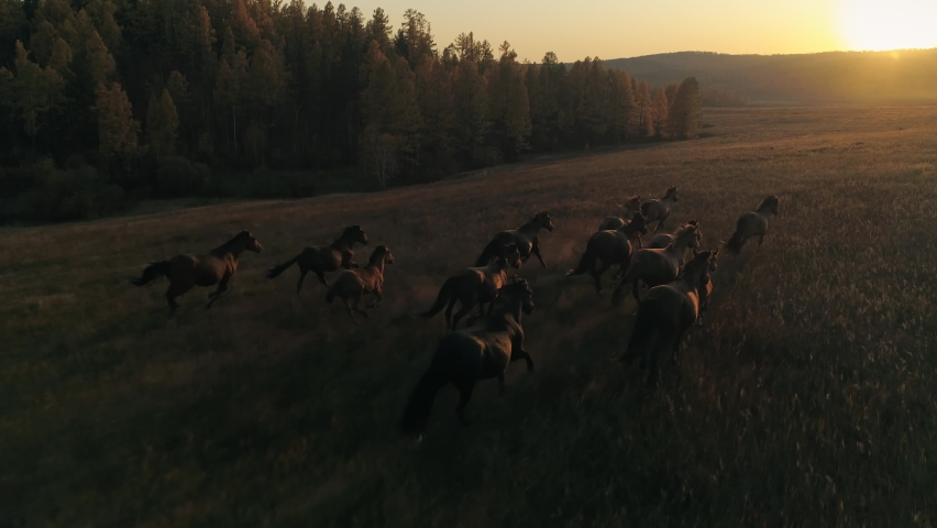 Aerial emotional film orange sunset sun large herd of horses galloping run across meadow towards sun's rays. Cinematic flight above wild equine. Autumn nature unique landscape. Slow motion stock shot Royalty-Free Stock Footage #1062340417