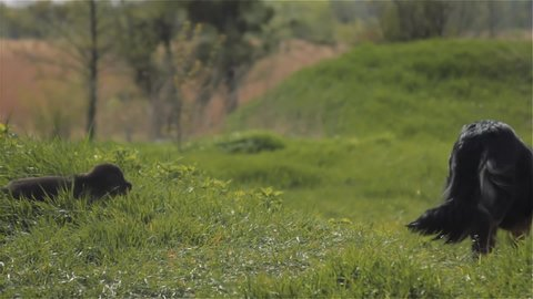 dog and puppy in the meadow