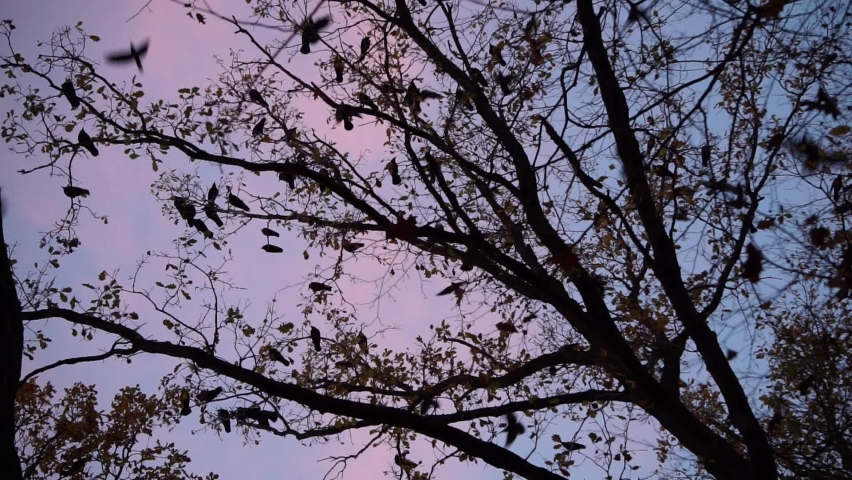 Flying away birds silhouettes among the treetops, evening sky in the background, autumn time   Shutterstock HD Video #1062573508