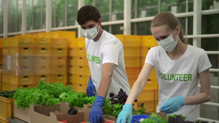 Volunteers pack vegetables to donate poor Spbd. Man and woman in t-shirt and mask help during coronavirus pandemic. Aid help service. Greenhouse agroholding activist prepare delivery