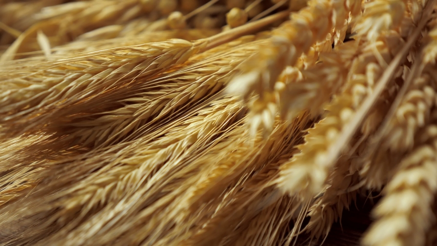 A bouquet of dried wheat, oats, rye, triticale, linen, flax,  on the background of an old wooden table or tabletop. Rustic background for presentations, natural plant growing businesses. | Shutterstock HD Video #1062606637