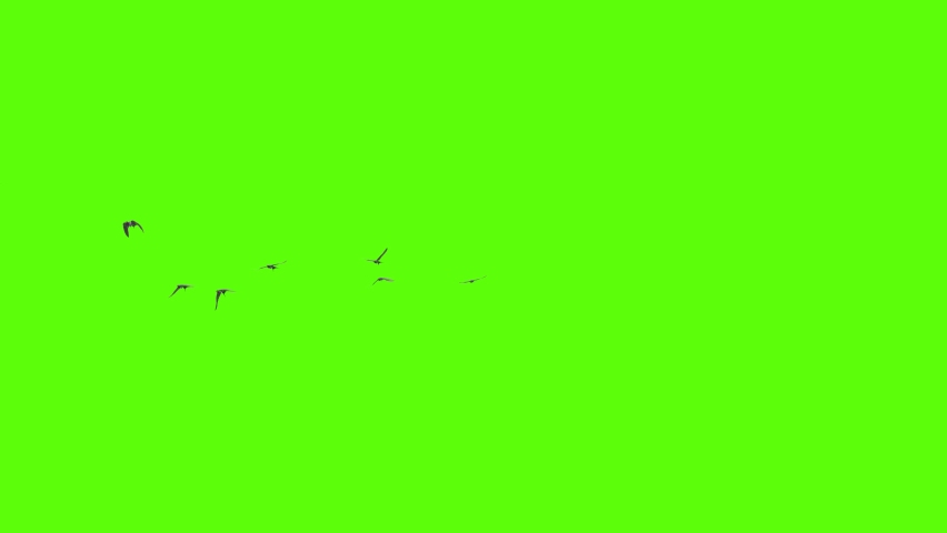A flock of swallows flying freely, a group of birds made in 3D | Shutterstock HD Video #1062606892