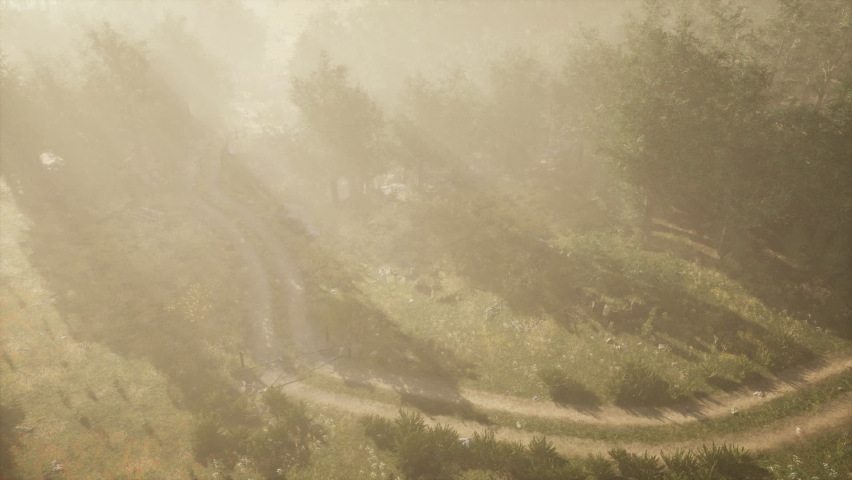 Dirt road through deciduous forest in fog  | Shutterstock HD Video #1062656764