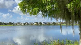 A tree with spanish moss waving in the breeze near a lake in a neighborhood