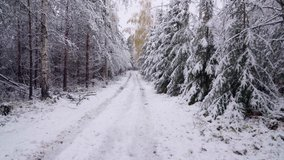 Forest and country road in the snow. Concept, winter has come. Static video.