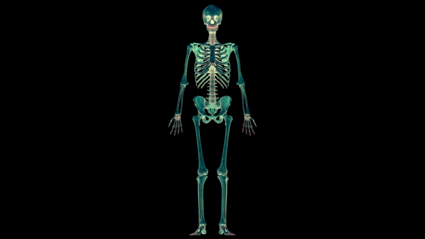 Human Skeleton System Bone Joints Anatomy Animation Concept. 3D Royalty-Free Stock Footage #1062723094