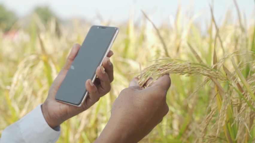 Close up of Farmer Hands checking the crop yield and pests by using mobile Phone - Concept of Farmer using Smartphone technology and internet in agriculture farmland | Shutterstock HD Video #1062965089