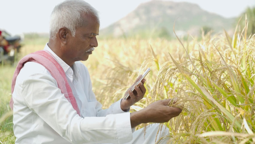 Farmer busy checking the crop yield and pests by using mobile Phone - Concept of Farmer using Smartphone technology and internet in agriculture farmland | Shutterstock HD Video #1063031119