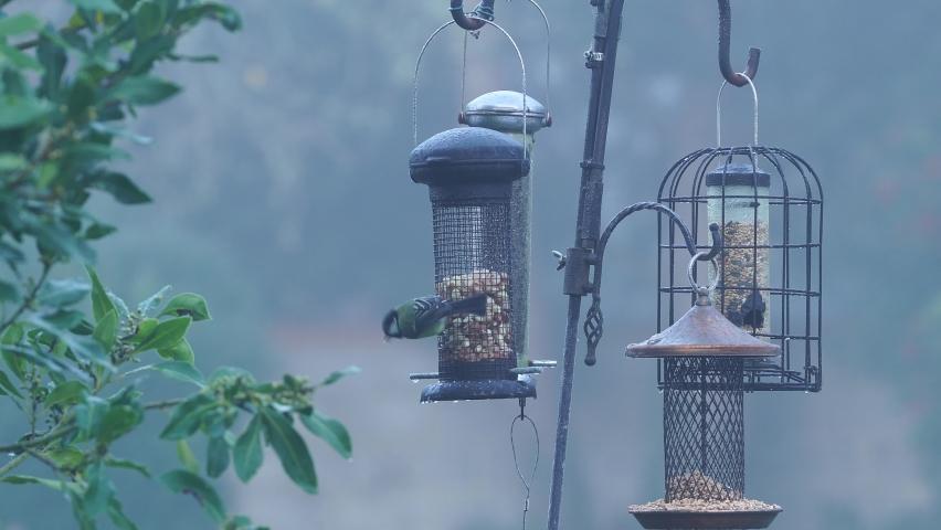 Garden birds feeding on a bird feeder in winter