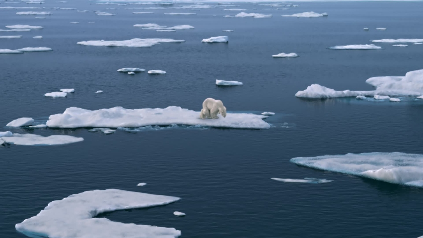 Polar bear mother with her two babies walking on melting broken sea ice in the Arctic. Global warming, melting glaciers, protecting the environment, high-altitude shooting Royalty-Free Stock Footage #1063115617