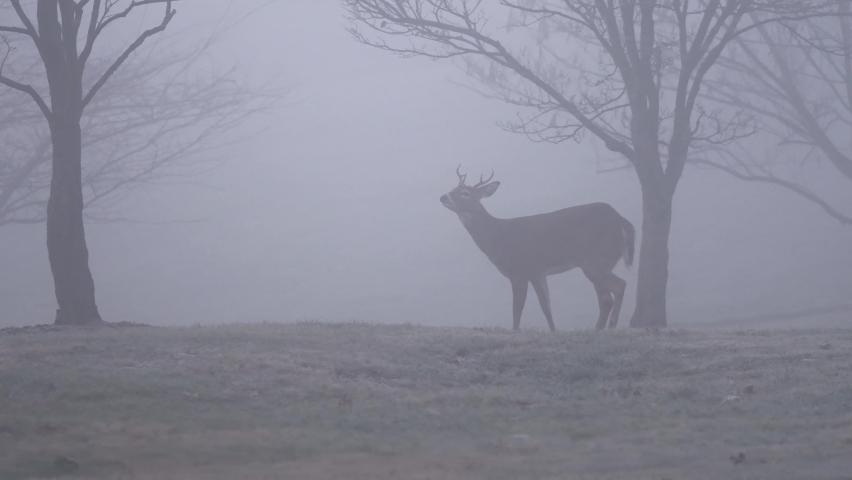 Moody Footage of Deer in the Fog. Royalty-Free Stock Footage #1063141129