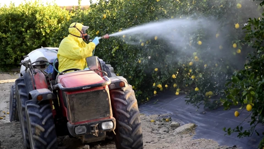 Spray ecological pesticide, pest, pesticides. Farmer fumigate in protective suit and mask lemon trees. Man spraying toxic pesticides, pesticide, insecticides  Royalty-Free Stock Footage #1063199503
