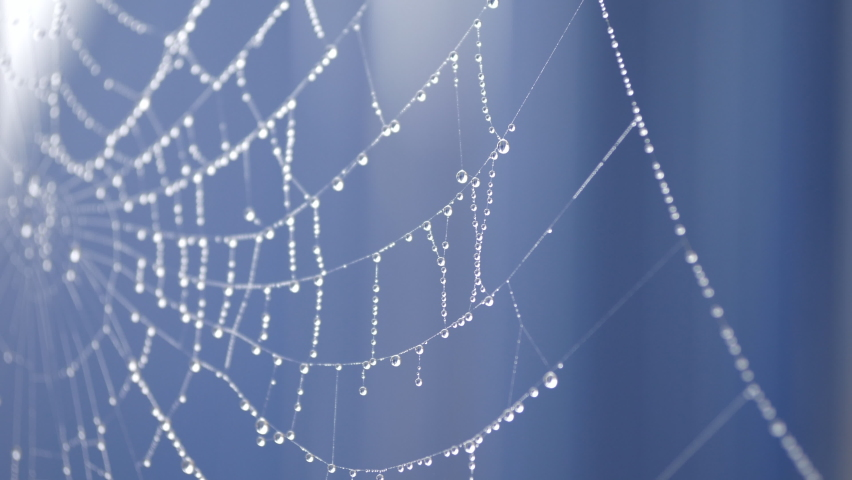 A close up view of rain droplets on a spider web.