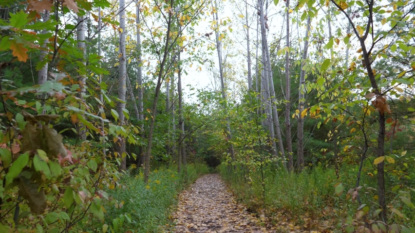 POV Hiking Through Narrow Forested Path - Leaf-Covered Trail in Autumn | Shutterstock HD Video #1063334698