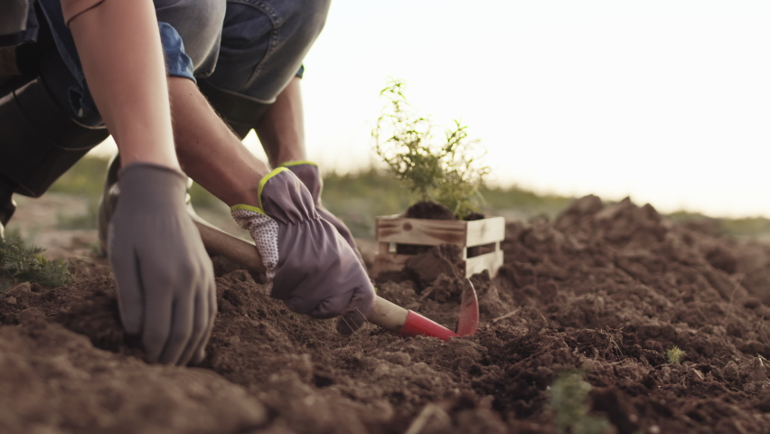 Close up of two unrecognizable gardeners wearing rubber boots and gloves are sitting near plant-bed and planting plants together Royalty-Free Stock Footage #1063376191