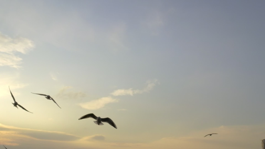 Slow motion footage of silhouette seagulls on sunset at Bostanli Izmir. | Shutterstock HD Video #1063533772