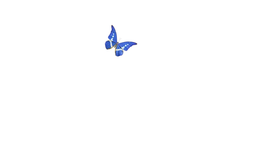 Close-up of a blue-gray butterfly flying in the air and then falling, a beautiful Morpho Helena Royalty-Free Stock Footage #1063572148
