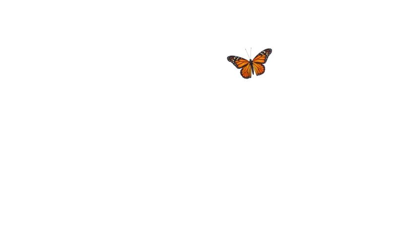 A beautiful monarch butterfly freely flying, then falling down. 3D rendering Royalty-Free Stock Footage #1063572193