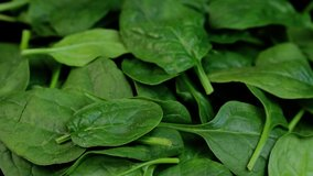 Fresh spinach with rotating on black background. Close up macro video.