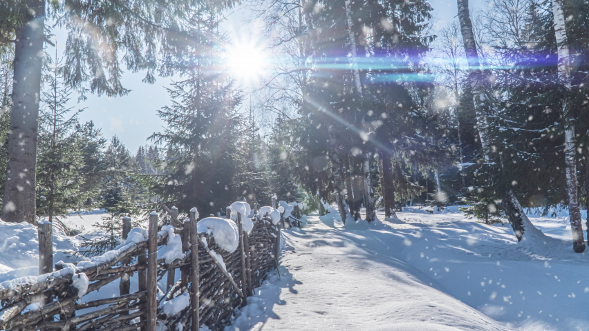 Winter scene Snowfall. Cinemagraph, beautiful snowfall in the forest, video loop. Christmas winter concept Royalty-Free Stock Footage #1063675357