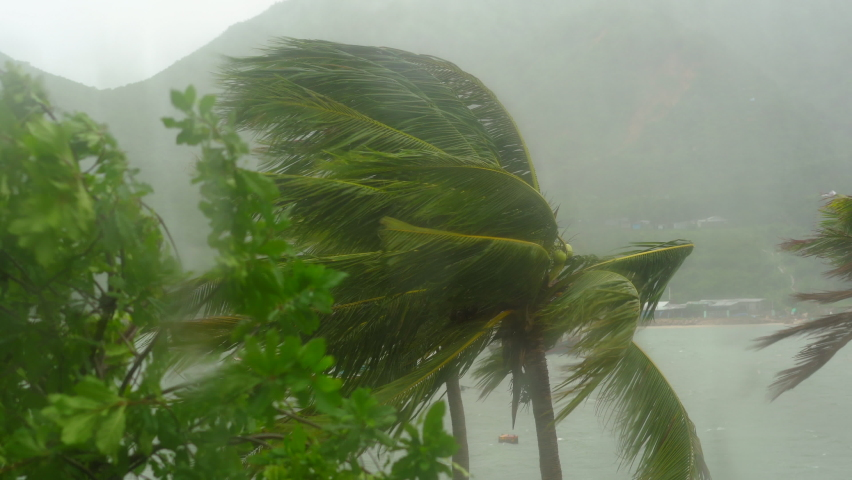 Trees and Palm trees under heavy rain and very strong wind. Shot through a rain-drenched window. Tropical storm concept. Contains natural sound