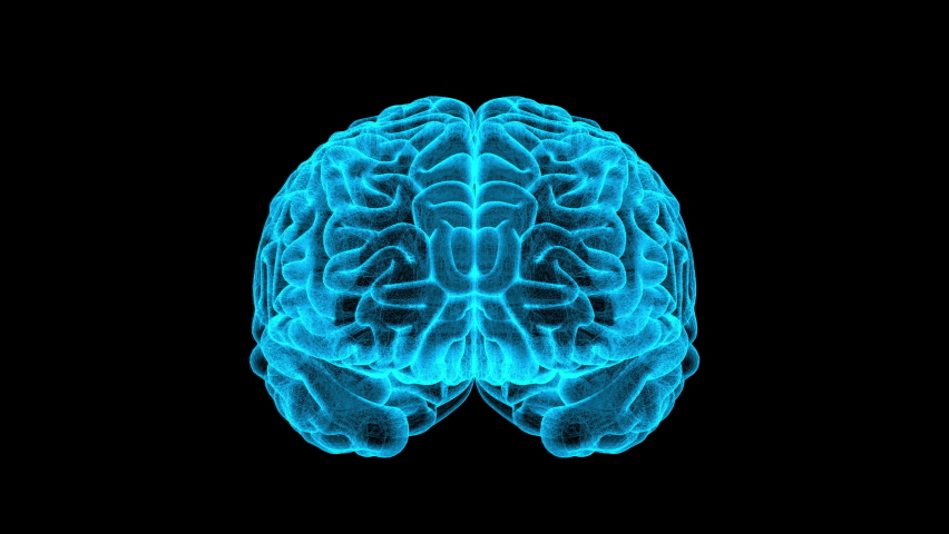 3D Brain Transparent Blue Wireframe Rotating With Alpha Loop, Artificial Intelligence of Medical Science for Anatomy, Element Augmented Virtual, Hologram Futuristic Digital Technology Royalty-Free Stock Footage #1063807867