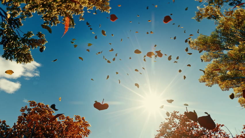 Colorful falling autumn leaves. View through the autumn foliage in the mountain forest. Golden tree leaves. Look up at the golden autumn leaves falling. Slow motion 4K 3d animation | Shutterstock HD Video #1063852039