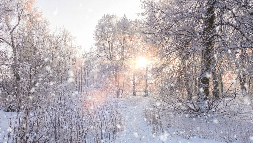 Frosty morning. Freezing weather. Amazing winter landscape with romantic foggy sunrise. Soft snowfall in the winter snowy forest. Royalty-Free Stock Footage #1063888504