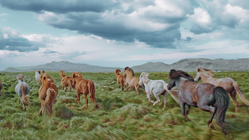 Epic Aerial Over Large Herd Of Wild Horses Running Galloping In Wild Nature Slow Motion Through Meadow Golden Hour Horse Breeding Ecology Exploration Power Concept 4K | Shutterstock HD Video #1064110966