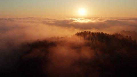 sunny foggy winter forest hills on sundown