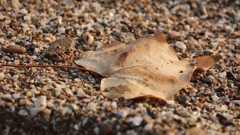 Brown Leaves Harvest Heart Autumn