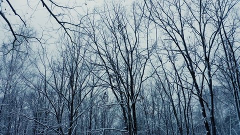 Snowy forest winter nature cold fall move beautiful steady shot