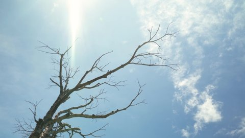 Dried twig and branches of Tree with flare sun light among blue sky
