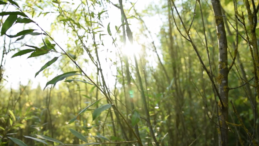 Green Reed Jungle Forest with Sun flair Summer, Sunny, Green  | Shutterstock HD Video #1064886424