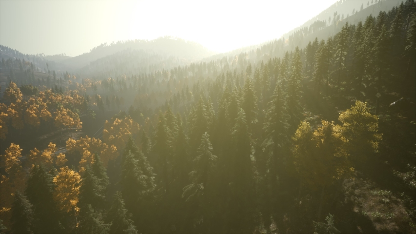 Aerial Drone View Flight over pine tree forest in Mountain at sunset   Shutterstock HD Video #1064925805