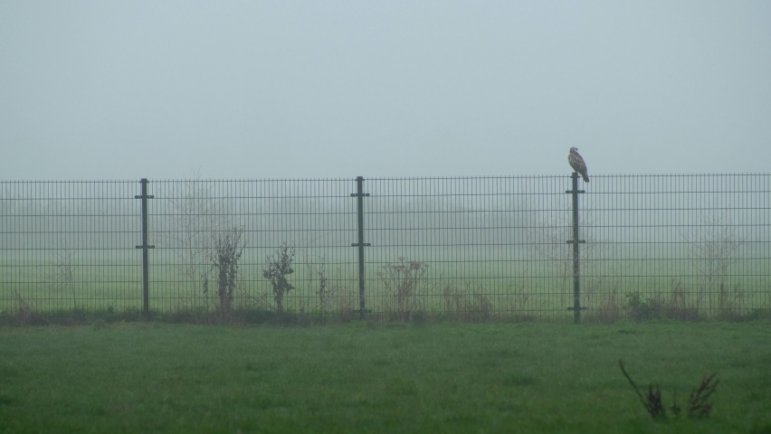 Medium shot white hawk on the fence in winter morning. Slow motion 4K | Shutterstock HD Video #1064943505