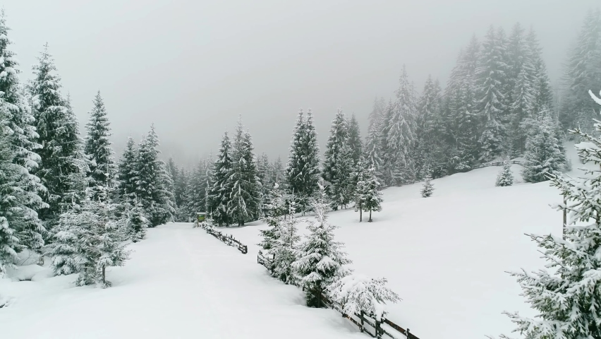 Snowy Winter Season Snowfall Scenery Wonderland. Snow Ambience. Snow Covered Pine Trees, Landscape 4K Aerial View Drone Shot Video Footage Background   Shutterstock HD Video #1064994862
