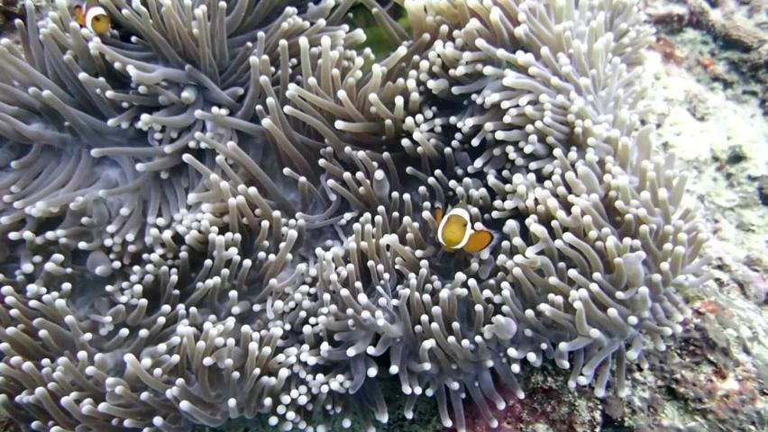 Under water wih cute clown fish | Shutterstock HD Video #1064997805