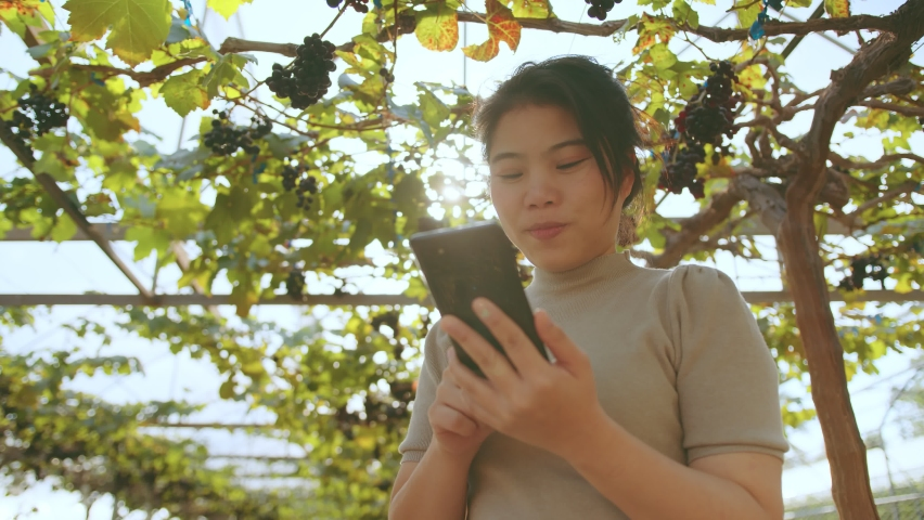 Young asian female entrepreneur walking check quality control examine grape farm with smartphone ,Farm, hobby, agriculture concept | Shutterstock HD Video #1065585970