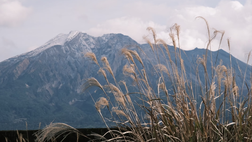 Sakurajima with snow and Japanese pampas grass blown by the wind | Shutterstock HD Video #1065587926