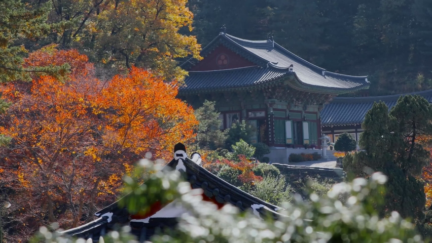 Traditional Japanese temple (castle) in autumn. Japanese architecture surrounded by nature. Ancient zen paradise. | Shutterstock HD Video #1065589495