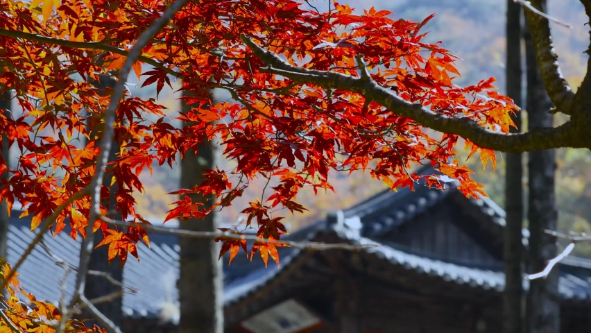 Traditional Japanese temple (castle) in autumn. Japanese architecture surrounded by nature. Ancient zen paradise. | Shutterstock HD Video #1065589498