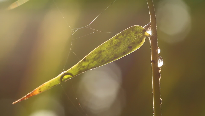 Leaf of tree and dew drop in the morning, Chiangmai Thailand. | Shutterstock HD Video #1065592558