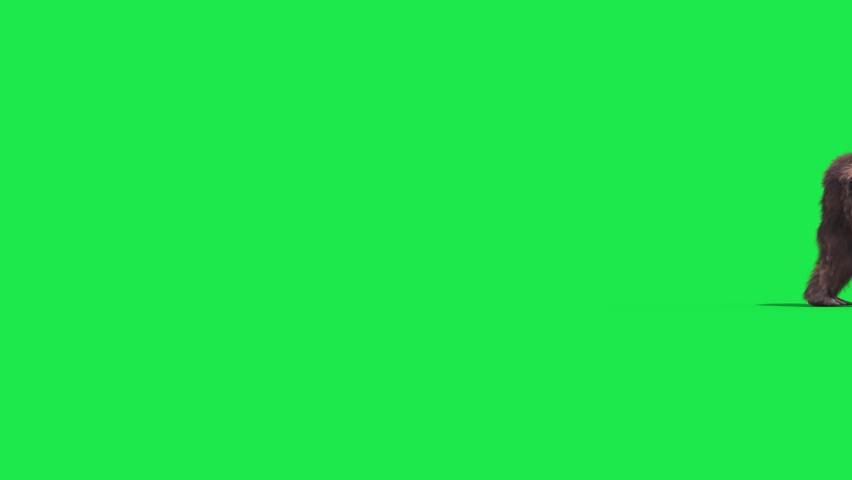 Green Screen Bigfoot Yeti Walk Side Real Fur 3D Rendering Animation 4K Royalty-Free Stock Footage #1065601582
