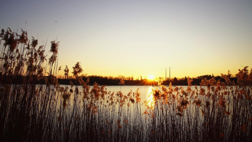 Reeds swaying in the wind by Lac de Créteil at sunset in Paris, France   Shutterstock HD Video #1065604879