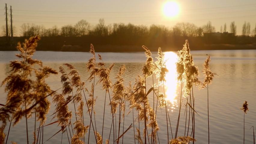 Fantastic sunset and reeds by Lac de Créteil in Paris, France   Shutterstock HD Video #1065604882