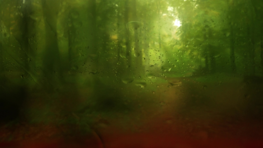 It is raining in the green deciduous forest. The camera is in a car and filming through the windshield. Sound of falling drops on the car. Very green forest. Original sound. Camera remains static.  | Shutterstock HD Video #1065614551