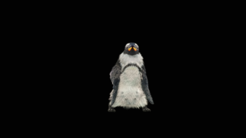 Penguin Dancing CG fur 3d rendering animal realistic CGI VFX Animation  Loop alpha dance composition 3d mapping, Included in the end of the clip with Alpha matte. | Shutterstock HD Video #1065614563