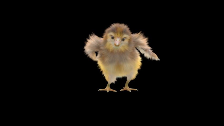 Baby Chickens Dance CG fur 3d rendering animal realistic composition 3d mapping cartoon, Animation Loop, Included in the end of the clip with Alpha matte.  | Shutterstock HD Video #1065614566
